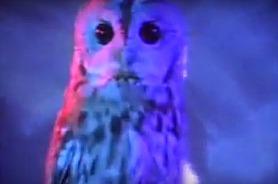 owlleppard